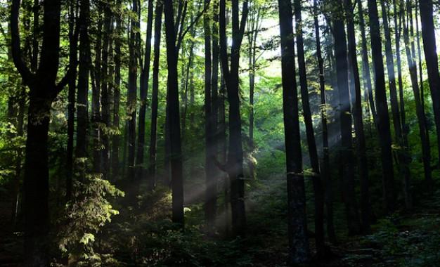 Padurea Baciu-portal intre doua lumi