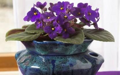 ABC-ul florilor: ce flori poti creste in apartament – Partea a II-a