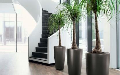 ABC-ul florilor: ce flori poti creste in apartament – Partea I